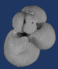 Planktonic foraminifera